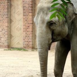 elefant001a