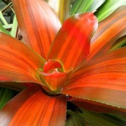 orangeblume001a
