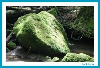 antetanni-fotografiert_Herz-Moos-Hoerschbach-Wasserfaelle