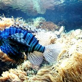 Zoo Leipzig Fisch