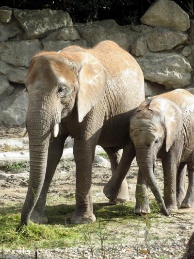 Tiergarten_Wien_Elefanten