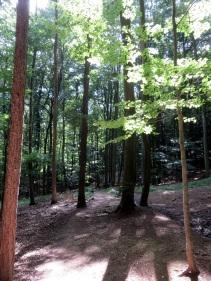 Wiener_Wald