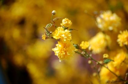 gelbe Blume Fotografie
