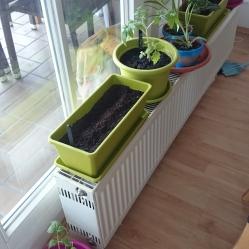 Tomaten, Radieschen, Erdbeeren anpflanzen