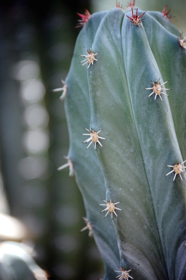 Palmengarten Frankfurt Kaktus