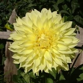 Blume Südtirol