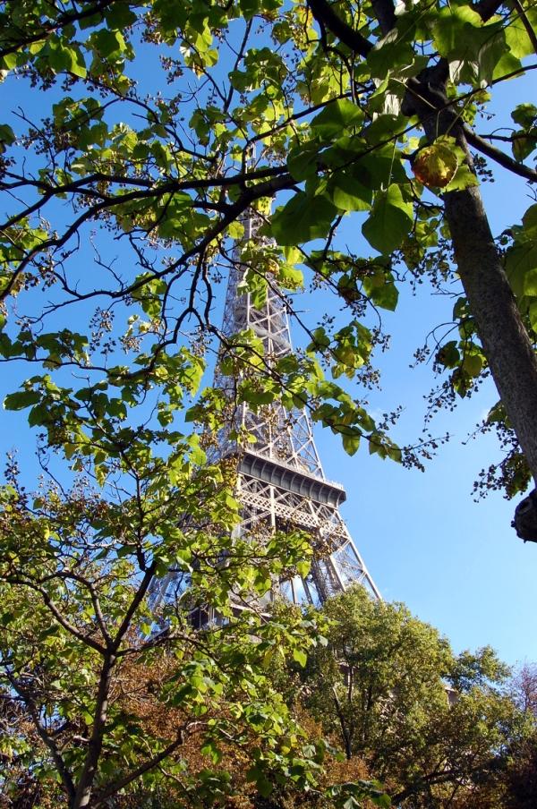 Paris Eiffelturm mit Baum