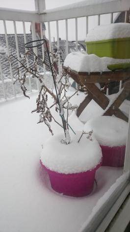 Schnee im März