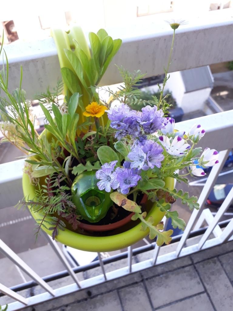 Wildblumen am Balkon